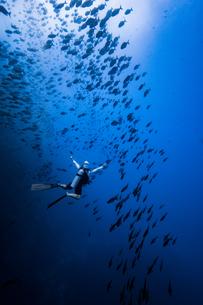 Diver swimming with school of fish, Revillagigedo Islands, Socorro, Baja California, Mexicoの写真素材 [FYI03624632]