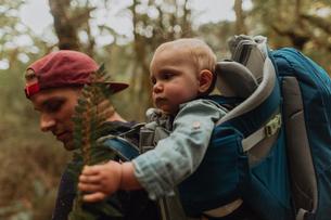 Hiker with baby exploring forest, Queenstown, Canterbury, New Zealandの写真素材 [FYI03625042]