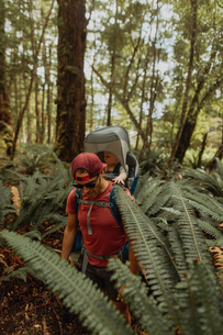 Father with baby exploring forest, Queenstown, Canterbury, New Zealandの写真素材 [FYI03625080]