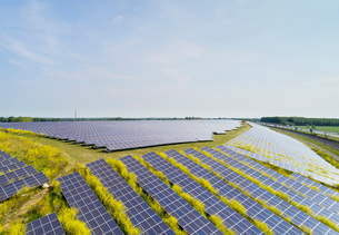 Solar panels surrounded by mustard plants at solar farm, Geldermalsen, Gelderland, Netherlandsの写真素材 [FYI03625139]