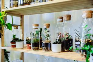 Bottled plants on shelf in nurseryの写真素材 [FYI03625293]