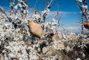 Evil eye tree, Pigeon Valley, G?reme, Cappadocia, Turkeyの写真素材 [FYI03626182]