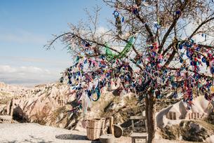 Evil eye tree, Pigeon Valley, G?reme, Cappadocia, Turkeyの写真素材 [FYI03626184]
