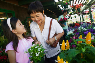 Grandmother and granddaughter in plant nurseryの写真素材 [FYI03626824]