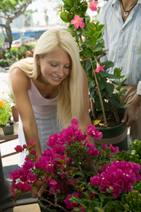 Woman Shopping for Flowers at plant nurseryの写真素材 [FYI03626843]
