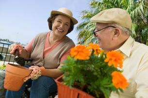 Senior couple gardeningの写真素材 [FYI03627348]
