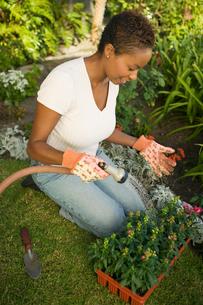 Woman watering plants in garden  (elevated view)の写真素材 [FYI03627367]
