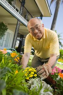 Senior man gardening  (portrait)の写真素材 [FYI03627370]
