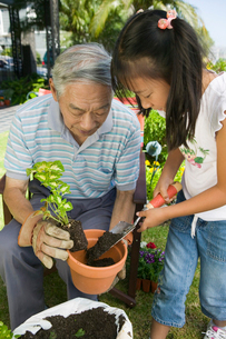 Grandfather and granddaughter gardeningの写真素材 [FYI03627375]