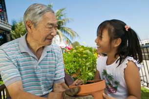 Grandfather and granddaughter gardeningの写真素材 [FYI03627376]