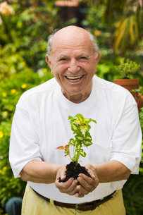 Senior man holding seedling in garden  (portrait)の写真素材 [FYI03627381]