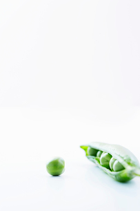 Open pea pod containing peas and single pea  close-upの写真素材 [FYI03629286]