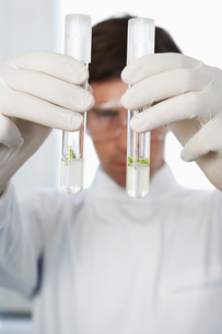 Male lab worker comparing two test tubes with liquidの写真素材 [FYI03630298]