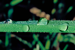 Water Droplets on Leafの写真素材 [FYI03630497]