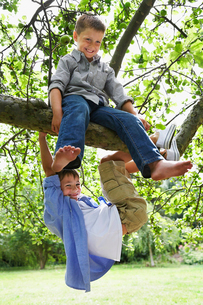 Two boys (7-9) playing on tree branchの写真素材 [FYI03630565]
