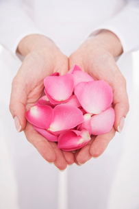 Woman cupping hands full of petals  mid section  close-upの写真素材 [FYI03630590]