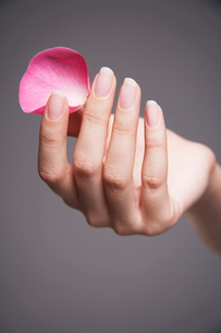 Woman holding single rose petal between finger and thumbの写真素材 [FYI03630603]