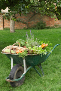 Wheelbarrow Full of Vegetablesの写真素材 [FYI03630634]