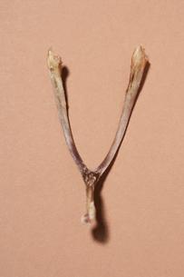 Wishboneの写真素材 [FYI03630764]