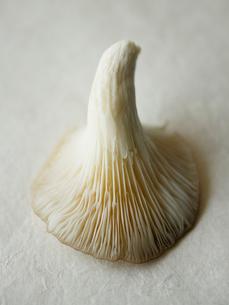 mushroom  upside-downの写真素材 [FYI03631211]