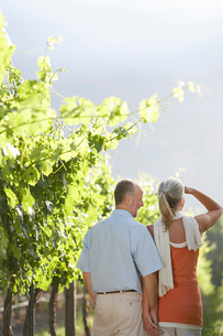 Mature couple at the vineyard  back viewの写真素材 [FYI03631828]