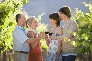 Family toasting in vineyardの写真素材 [FYI03631831]