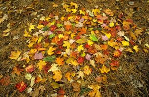 Pile of autumn leavesの写真素材 [FYI03632217]