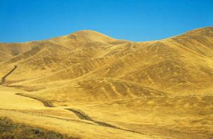 Road across yellow hillsの写真素材 [FYI03632618]