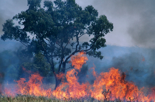 Australia  Bush fireの写真素材 [FYI03632863]