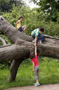 Three friends (7-9) climbing on fallen treeの写真素材 [FYI03633038]