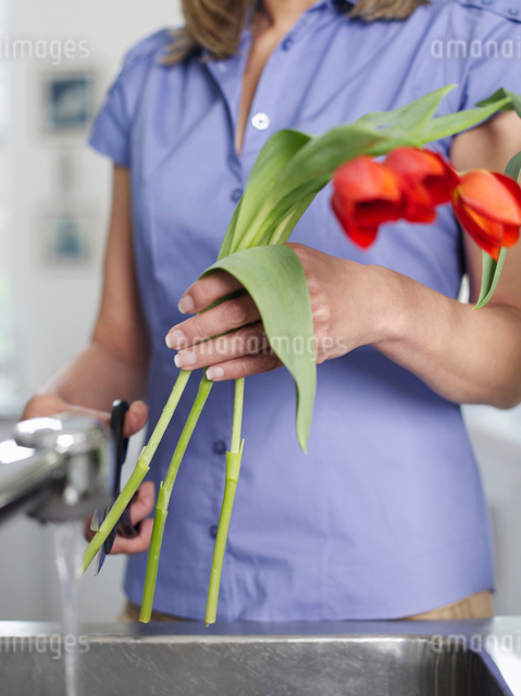 Mid-adult woman rinsing and cutting flowers in kitchen sinの写真素材 [FYI03633247]