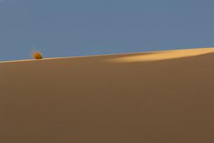 Bush on sand duneの写真素材 [FYI03633540]
