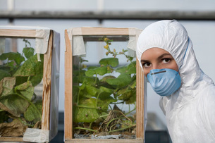 Worker in protective mask and suit by plants, portraitの写真素材 [FYI03633706]
