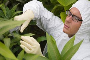 Worker in protective suit measuring plantsの写真素材 [FYI03633709]