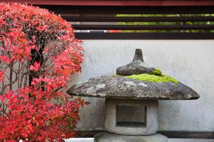 Stone Lantern and bush in Autumn colorsの写真素材 [FYI03633743]