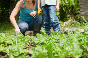 Boy gardening with mother, low sectionの写真素材 [FYI03633794]