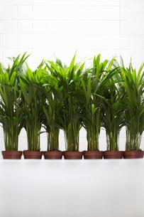 Plants growing side by sideの写真素材 [FYI03634267]