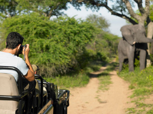 Man on safari taking photograph of elephant back viewの写真素材 [FYI03634422]