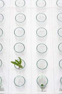 Plant in glass surrounded by empty glassesの写真素材 [FYI03635217]