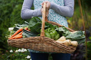 Woman holding vegetable basket  mid section  close-upの写真素材 [FYI03635433]