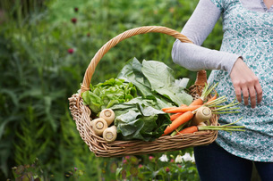 Woman holding vegetable basket  mid section  close-upの写真素材 [FYI03635434]