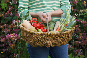 Woman holding fruit and vegetable basket  mid section  cloの写真素材 [FYI03635451]