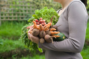 Woman holding vegetables in garden  mid section  side viewの写真素材 [FYI03635621]