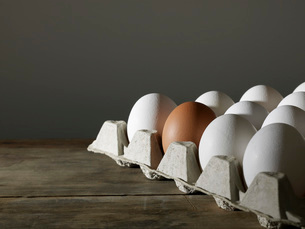 Carton of White Eggs with One Brown Eggの写真素材 [FYI03635776]