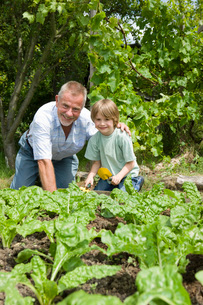 Boy gardening with grandfather  portraitの写真素材 [FYI03635814]