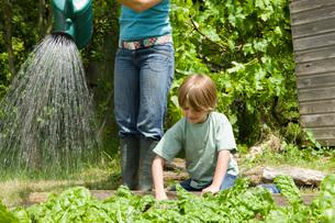 Boy gardening with motherの写真素材 [FYI03635815]