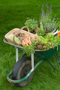Wheelbarrow Full of Vegetablesの写真素材 [FYI03637129]