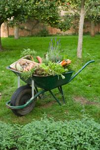 Wheelbarrow Full of Vegetablesの写真素材 [FYI03637131]