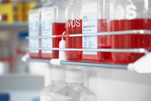 Red chemicals in laboratoryの写真素材 [FYI03637597]