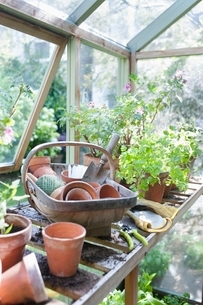 Gardening equipment on workbench in potting shedの写真素材 [FYI03637662]